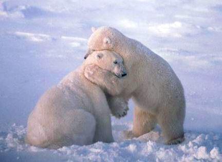 BEAR HUG MAMA                                                  BUNNY FUNNY SCARY
