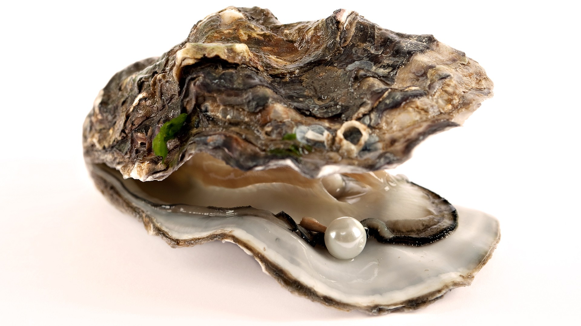 Live oysters with pearls inside - photo#8