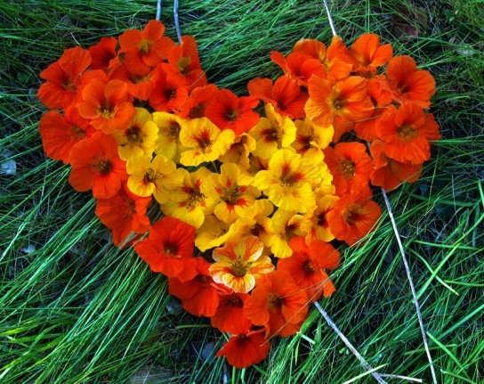 Flowers cauldrons and cupcakes - Fleur en forme de coeur ...