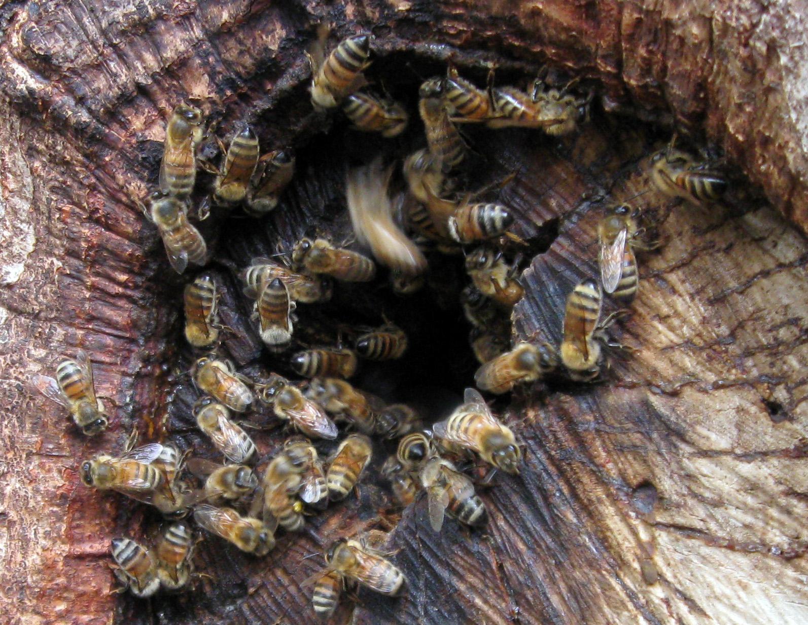 Honey bees cauldrons and cupcakes