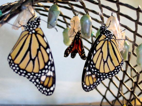 Image from www.ipandora.net