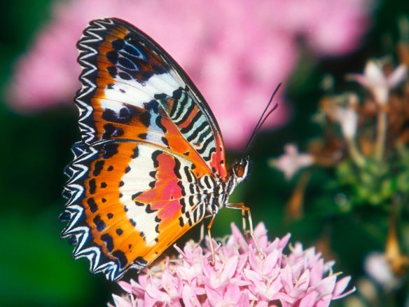 Image from www.fantom-xp.com