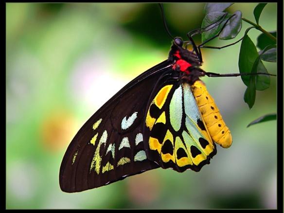Image from www.splendidwallpaper.com