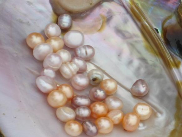 Freshwater-Pearls-In-The-Mollusk