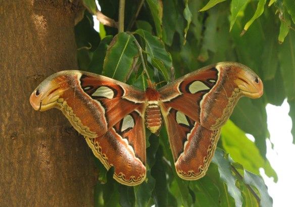 Image from www.churumuri.wordpress.com
