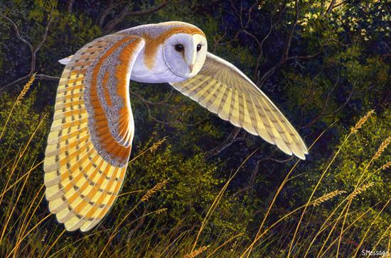 Image from www.truewildlife.blogspot.com.au