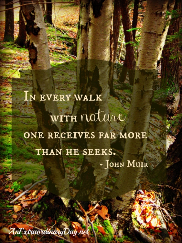 AnExtrarodinaryDay.net-Birches-in-the-woods-John-Muir-quote-about-Nature