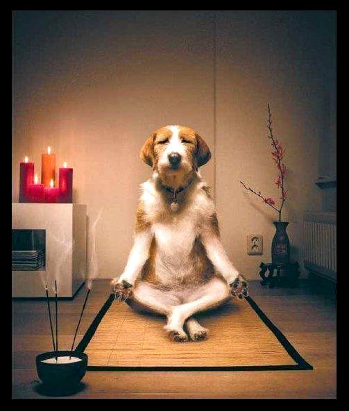 Image of dog meditating from Petspace