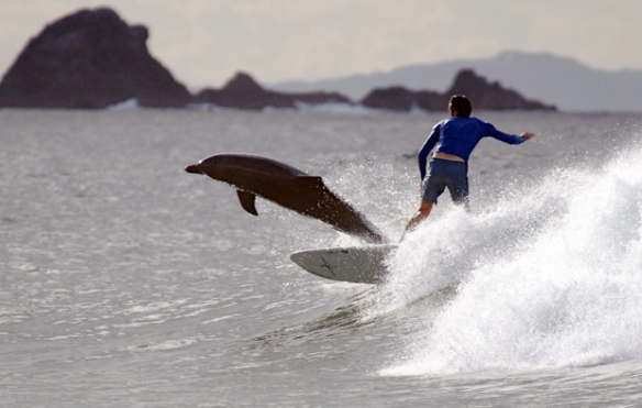 Surfing dolphin, Byron Bay, by Graham Nixon