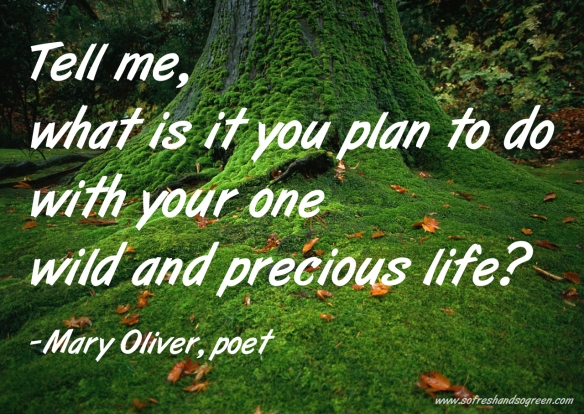 mary-oliver-quote-www-sofreshandsogreen-com