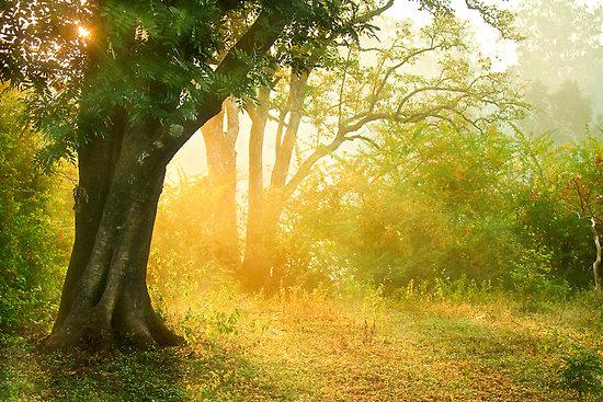 The Golden Light  by bnilesh