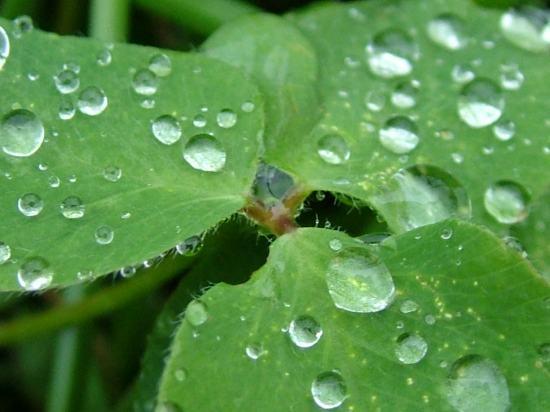 _rain-drops-
