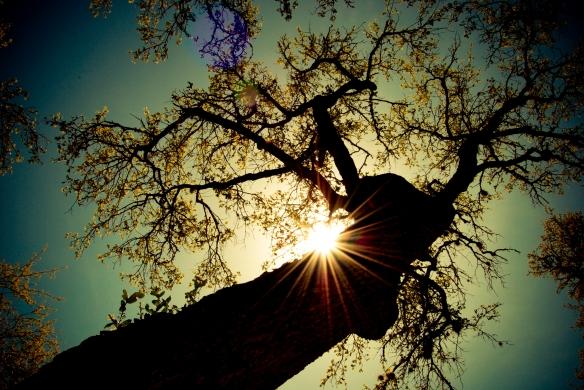 139546.looking-up-at-tree