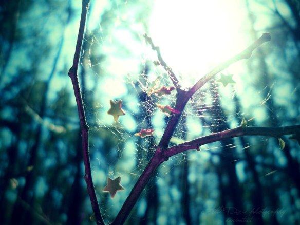 Dreamcatcher by Alli Dzi - Deviantart