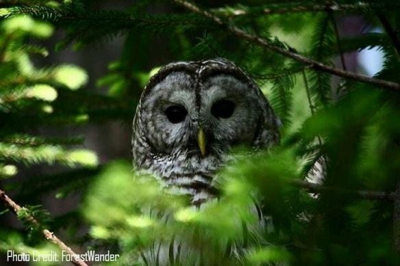 Image by ForestWander