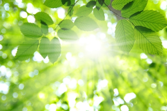 Healing Light, heart light, healing pain,